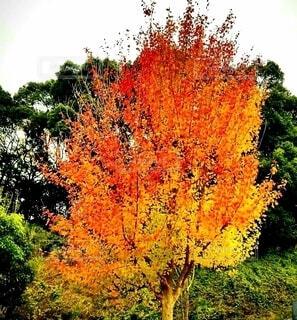 空,花,秋,屋外,葉,山,樹木,旅行,草木,紅葉狩り,赤と黄色