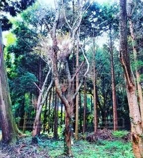 自然,風景,森林,屋外,緑,散歩,茶色,景色,光,樹木,草木,個性的