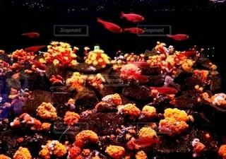 魚,赤,水族館,葉,旅行,休日,水槽,イソギンチャク,水の中
