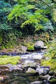 川の流れと緑のグラデーションの写真・画像素材[4959420]