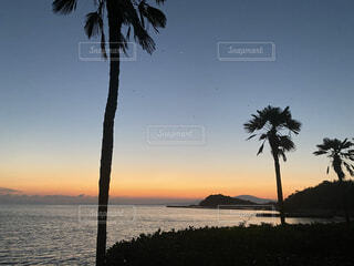 自然,風景,空,屋外,湖,太陽,ビーチ,雲,夕暮れ,水面,海岸,樹木,朝,ヤシの木,草木,朝空