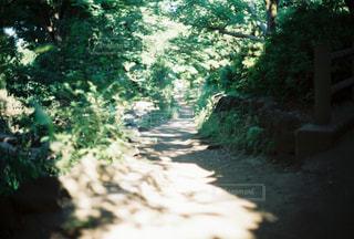 フォレスト内のツリーの写真・画像素材[722767]