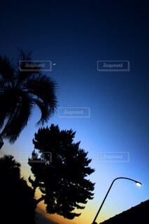 自然,風景,空,夜空,屋外,樹木,月,三日月,ヤシの木,夕陽,明るい