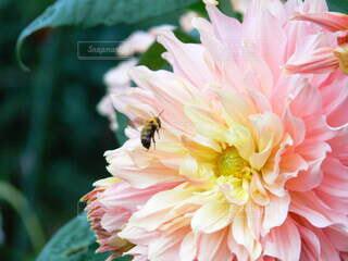 花のクローズアップの写真・画像素材[4836599]