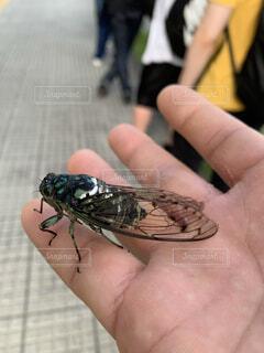 動物,手,人物,人,昆虫