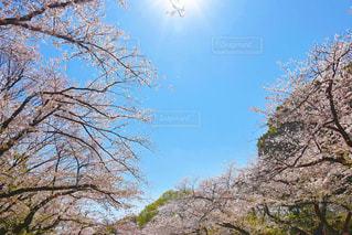 自然,風景,花,春,絶景,ピンク,季節,日本
