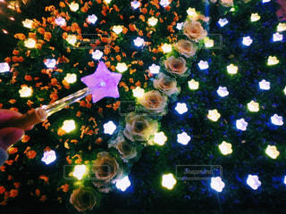 お花の写真・画像素材[270322]