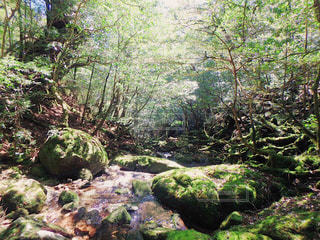 森の写真・画像素材[459472]