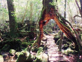 森の写真・画像素材[459477]