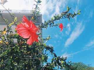 木からぶら下がって花の写真・画像素材[897065]