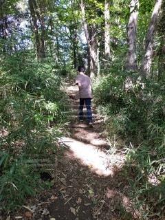 森の中の人の写真・画像素材[4878058]