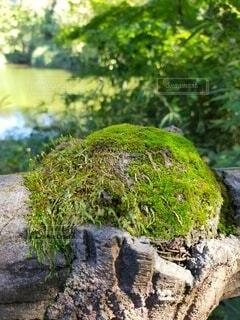 岩のクローズアップの写真・画像素材[4939058]