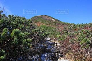 唐松岳を目指しての写真・画像素材[4941483]