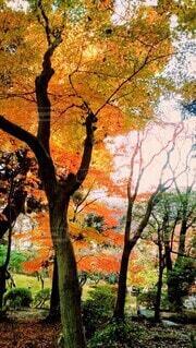 森の中の木の写真・画像素材[4933166]