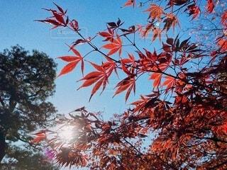 木のクローズアップの写真・画像素材[4843528]