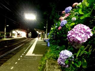 自然,風景,夜景,紫陽花,梅雨