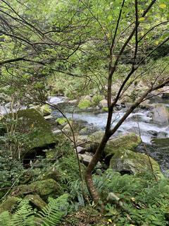 自然,屋外,川,水面,樹木,草木