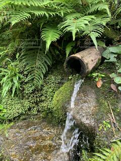 自然,屋外,水面,葉,滝,草木,シダ
