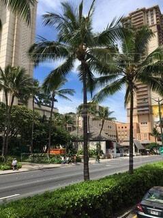 空,建物,屋外,道路,樹木,ヤシの木,ハワイ,通り,草木,パーム,ヤシ目