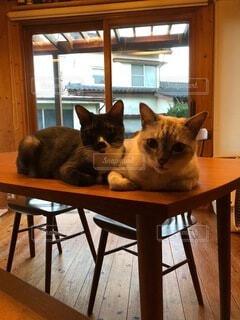 猫,動物,屋内,窓,景色,床,子猫,座る,家具