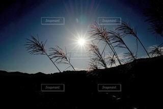 すすきを照らす太陽の写真・画像素材[4850847]
