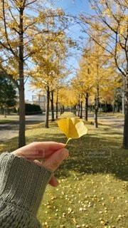 イチョウと秋の並木道の写真・画像素材[4858741]