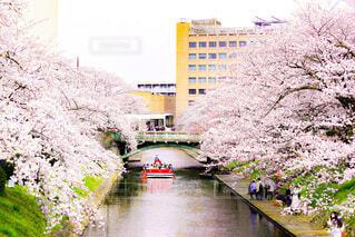桜の間を川下りの写真・画像素材[4852035]