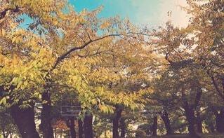 桜の木の写真・画像素材[4852385]