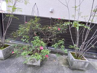 コンクリートのお庭にある植木鉢の写真・画像素材[4887735]