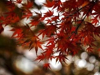紅葉の季節の写真・画像素材[4859299]