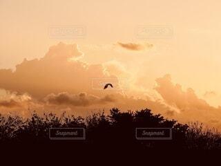 夕暮れの中飛んで行く鳥の写真・画像素材[4902154]