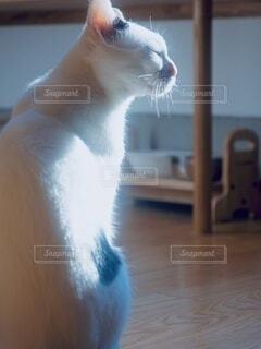 目を瞑るネコの写真・画像素材[4910626]