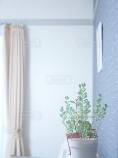 多肉植物とカーテンと壁リビングの一角の写真・画像素材[4926955]
