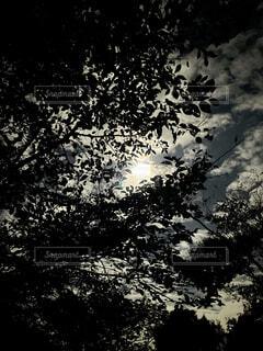 自然,風景,空,夜,屋外,雲,美しい,樹木,月,夜中,木の影から