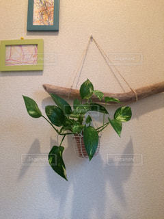 DIY,観葉植物,工作,トイレ,流木,子供の絵,流木アート
