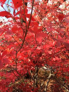 美しい秋の写真・画像素材[863381]