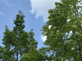 空と緑の写真・画像素材[4858977]
