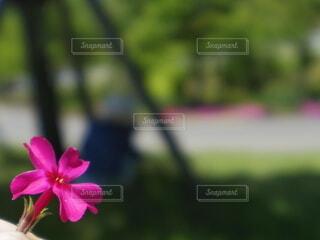 ピンクの花の写真・画像素材[4858975]