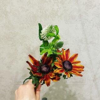 植物の花瓶の写真・画像素材[4872053]