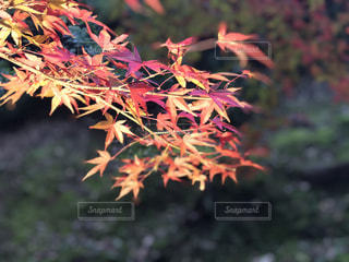 近くの木のアップの写真・画像素材[886794]