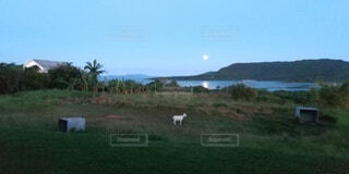 中秋の名月の写真・画像素材[4860592]