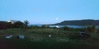 中秋の名月の写真・画像素材[4873256]