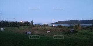 羊と月の写真・画像素材[4873255]