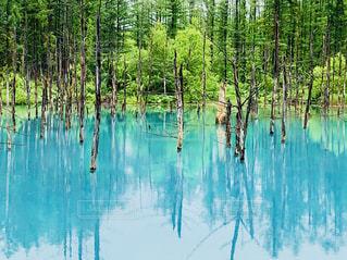 水の体の横にあるヤシの木のグループの写真・画像素材[1317468]