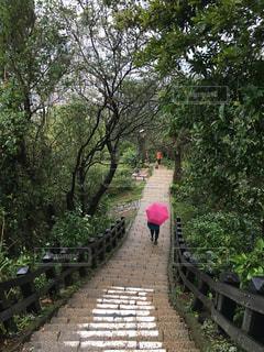 傘,ピンク,旅行,台湾,台北,海外旅行,林道,像山