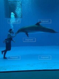 イルカの調教の写真・画像素材[4877186]