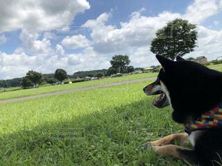 空の下、遠くを眺める愛犬の写真・画像素材[4873242]