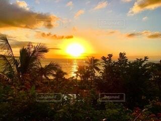 背景に夕日のある木の写真・画像素材[4863016]