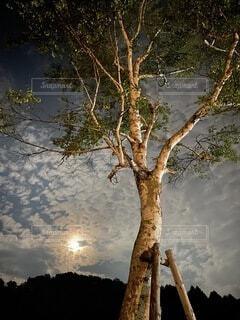 自然,風景,空,屋外,湖,水面,反射,樹木,月,白樺