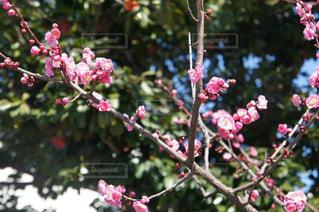 春の写真・画像素材[403315]